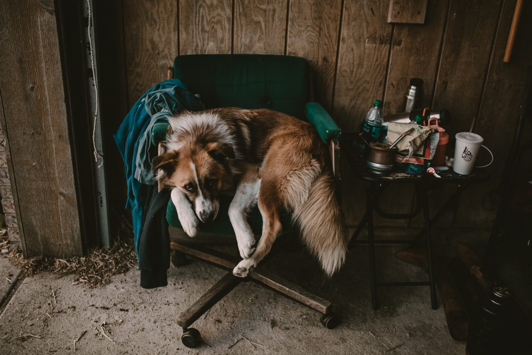 chicago-polo-pet-photographer-leah-lewis-dog-farm-arranmore
