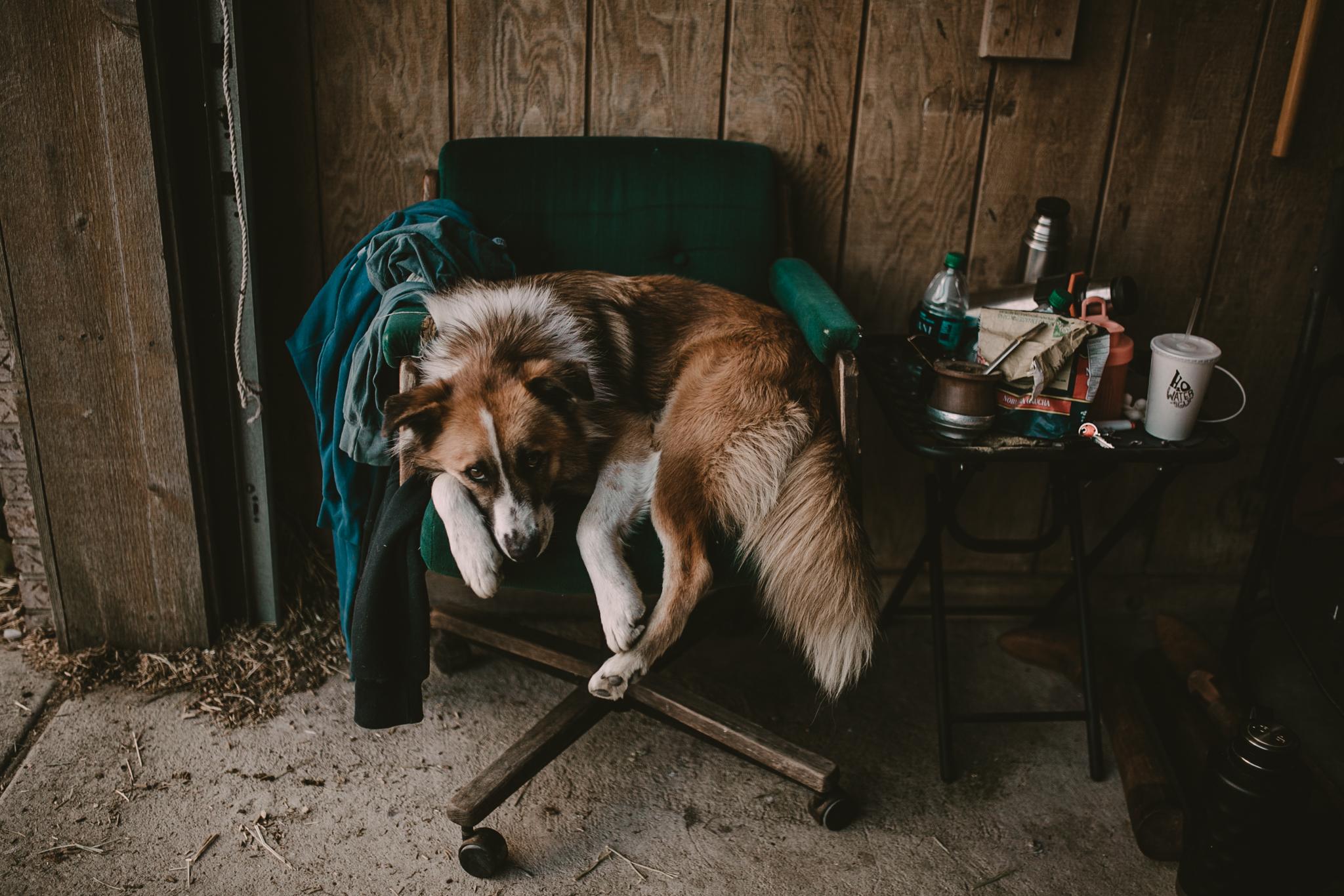 chicago-polo-pet-photographer-leah-lewis-dog-farm-arranmore