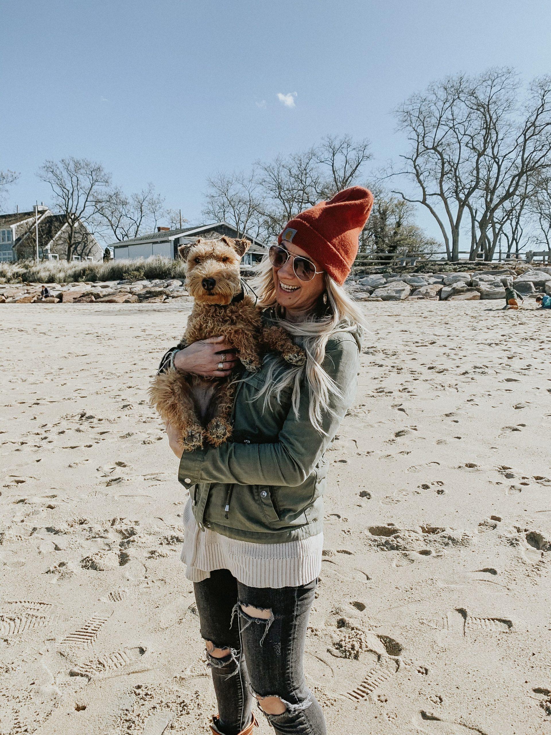 chicago, pet, photographer, equine, dog, cat, horse, equestrian
